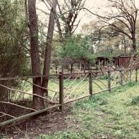 Twiggy Garden Fence